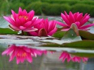 Oase AquaActiv starostlivosť o záhradné jazierko