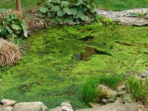 Voda zo studne pre záhradné jazierka